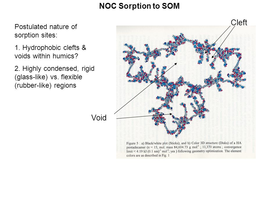 NOC Sorption to SOM Cleft Void Postulated nature of sorption sites: