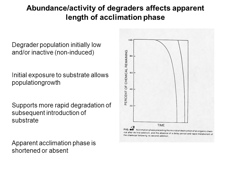 Abundance/activity of degraders affects apparent length of acclimation phase