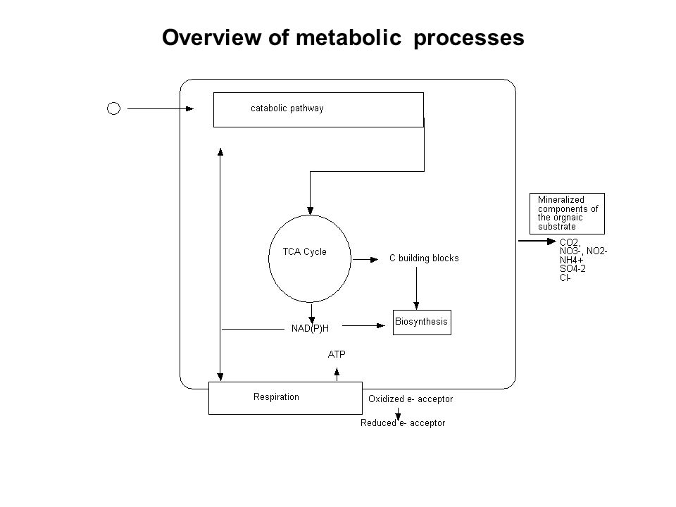 Overview of metabolic processes