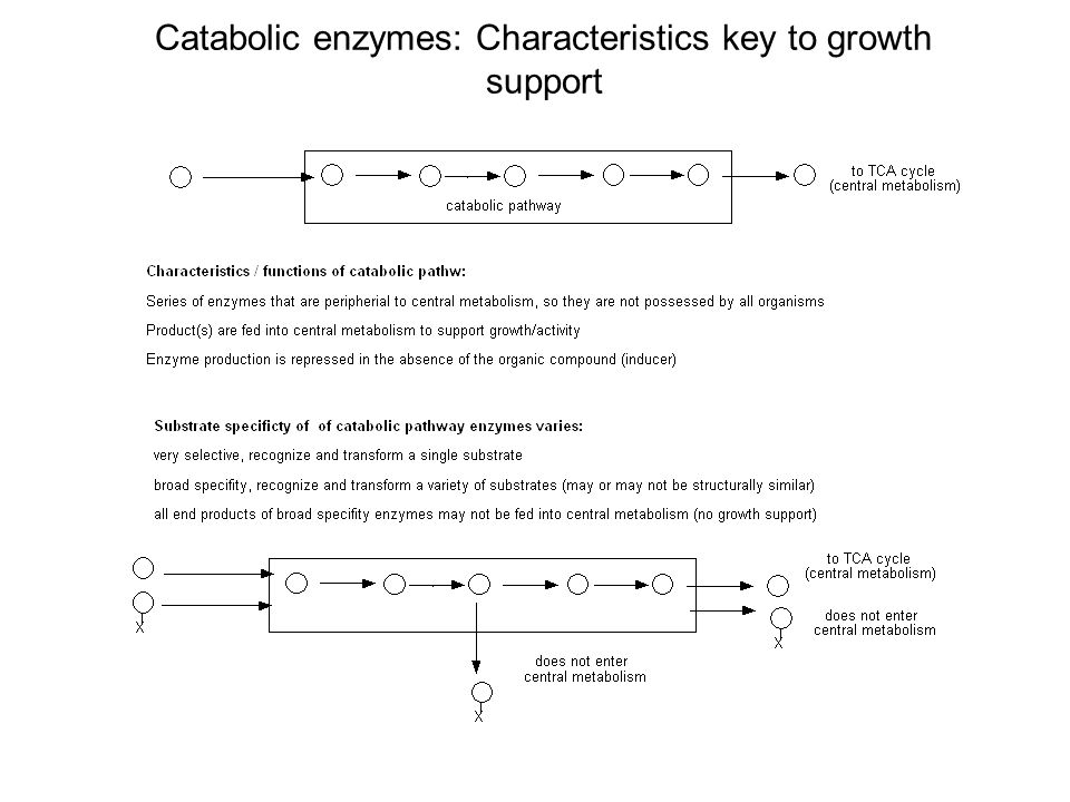 Catabolic enzymes: Characteristics key to growth support