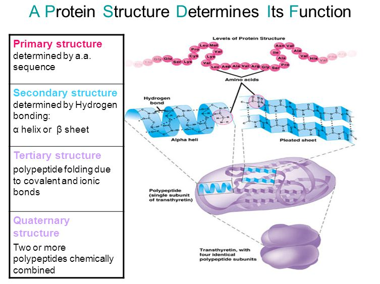 A Protein Structure Determines Its Function
