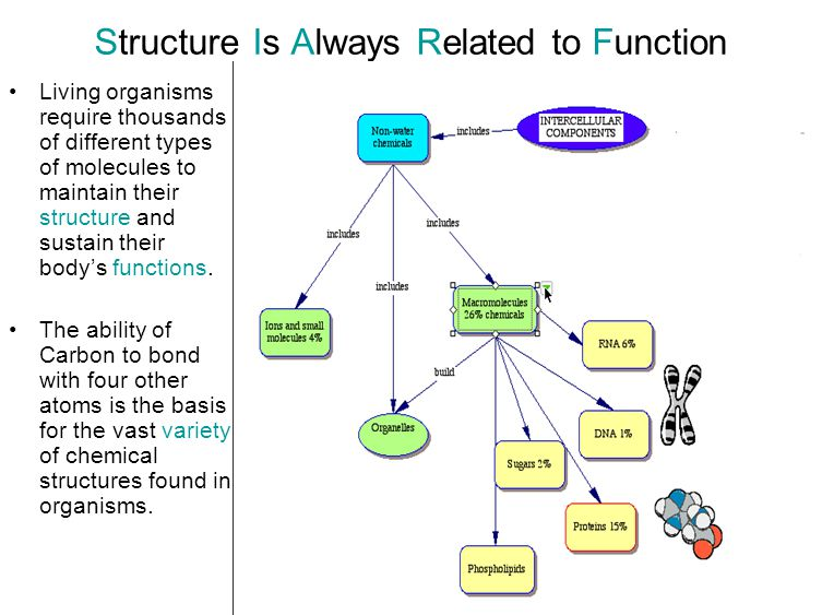 Structure Is Always Related to Function