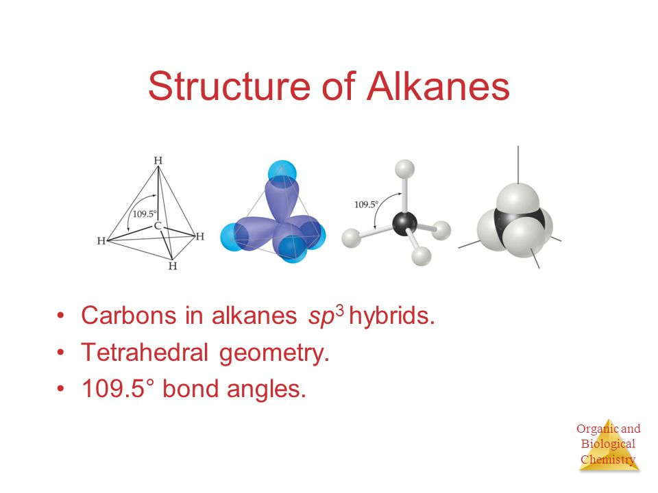 Structure of Alkanes Carbons in alkanes sp3 hybrids.