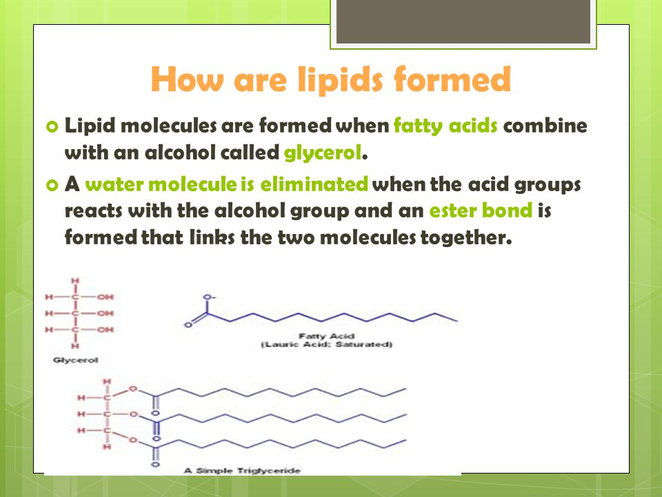 How are lipids formed Lipid molecules are formed when fatty acids combine with an alcohol called glycerol.