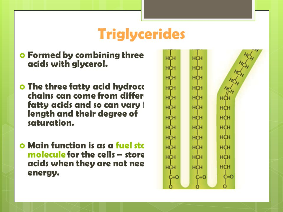 Triglycerides Formed by combining three fatty acids with glycerol.