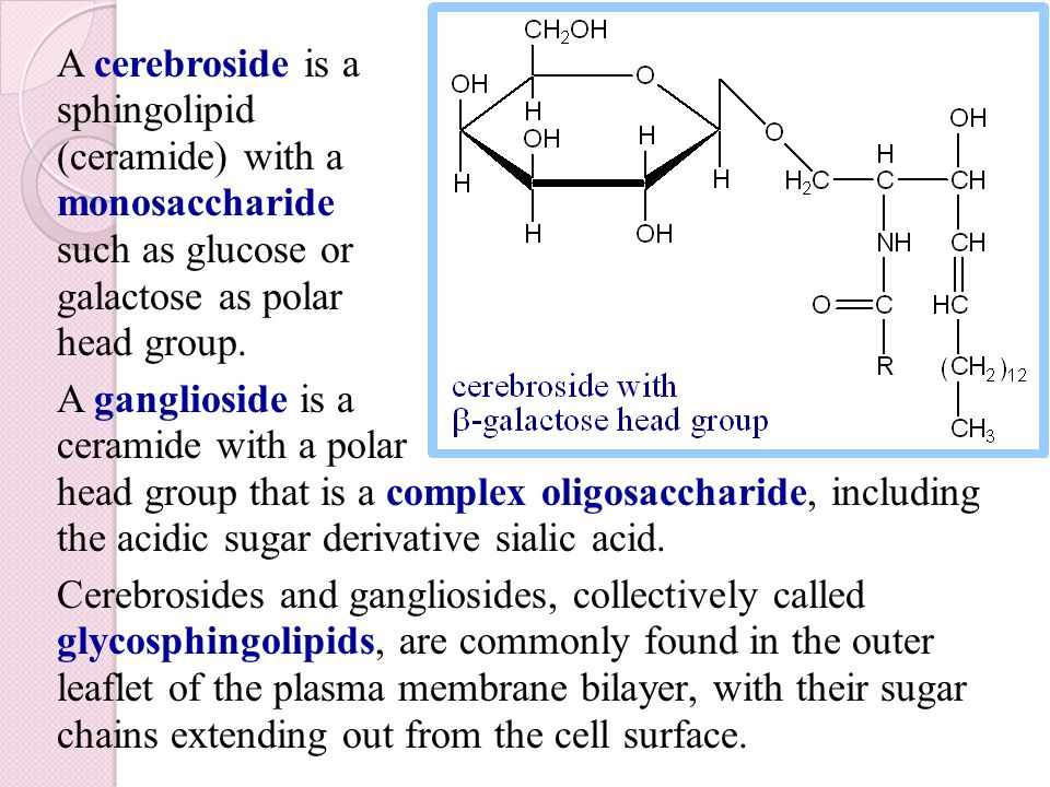 A cerebroside is a sphingolipid (ceramide) with a monosaccharide such as glucose or galactose as polar head group.