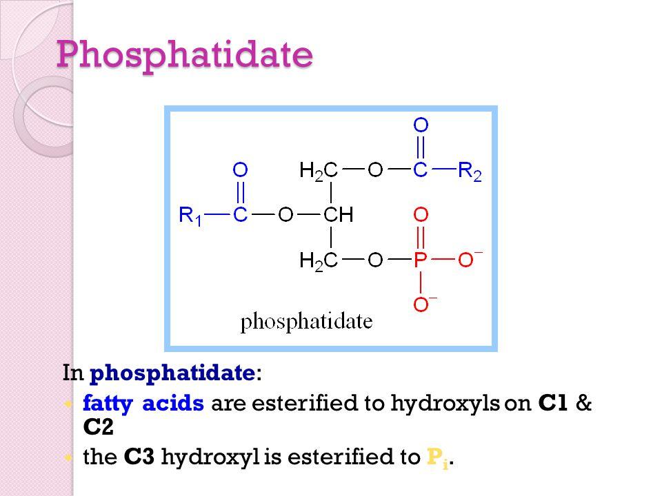 Phosphatidate In phosphatidate: