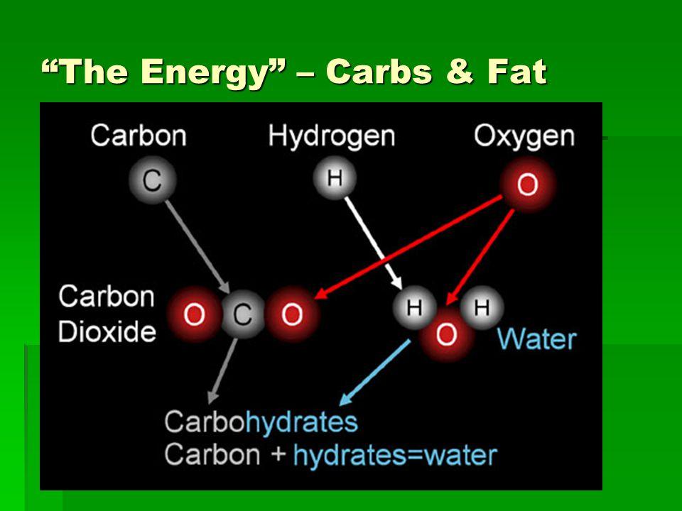 The Energy – Carbs & Fat