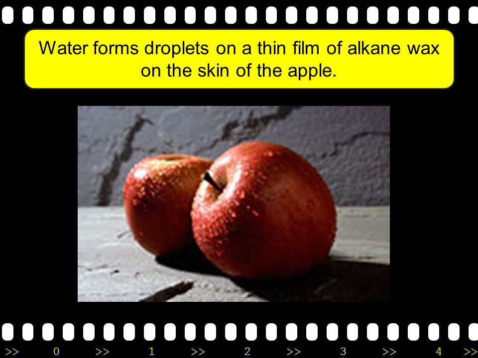 Water forms droplets on a thin film of alkane wax on the skin of the apple.