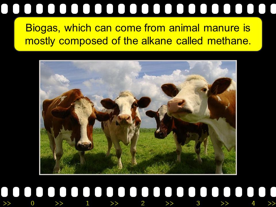 Biogas, which can come from animal manure is mostly composed of the alkane called methane.