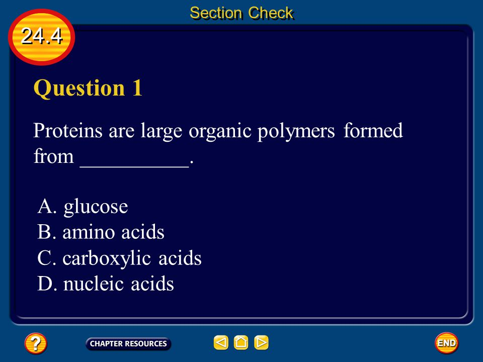 Section Check 24.4. Question 1. Proteins are large organic polymers formed from __________. A. glucose.