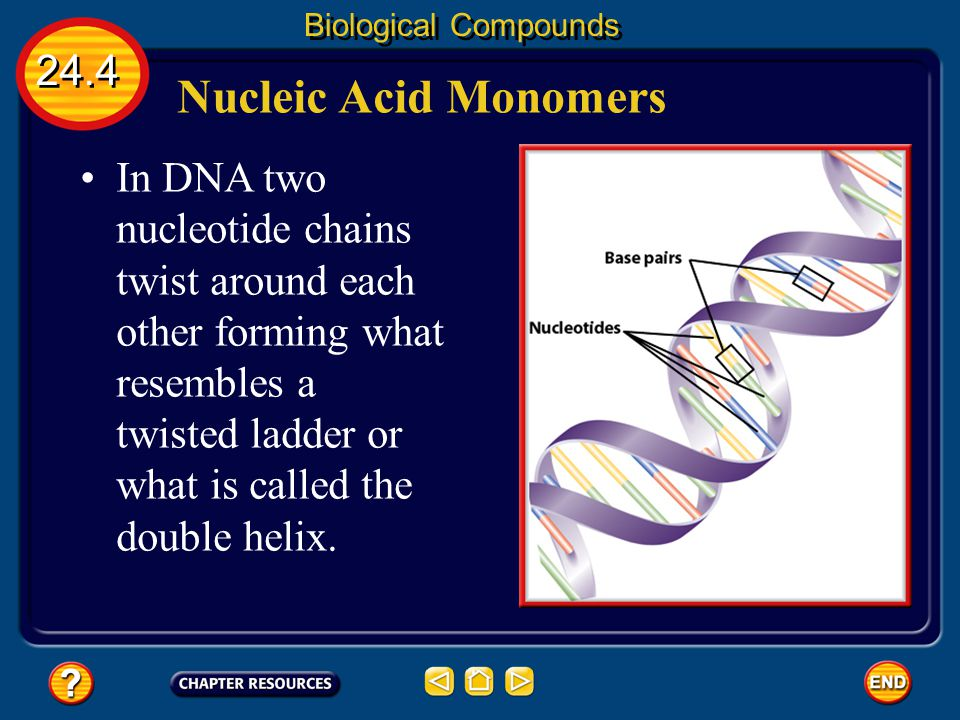 Biological Compounds 24.4. Nucleic Acid Monomers.
