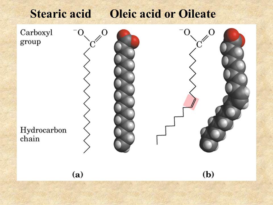 Stearic acid Oleic acid or Oileate