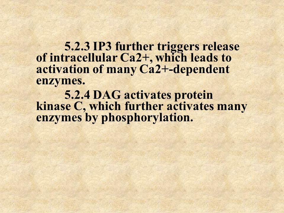 5.2.3 IP3 further triggers release of intracellular Ca2+, which leads to activation of many Ca2+-dependent enzymes.