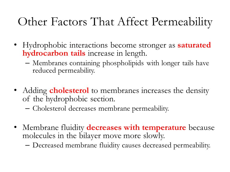 Other Factors That Affect Permeability