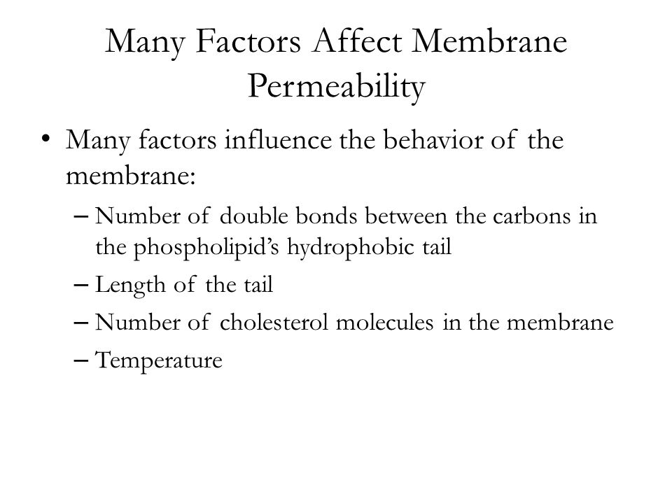Many Factors Affect Membrane Permeability