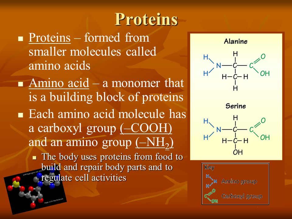 Proteins Proteins – formed from smaller molecules called amino acids