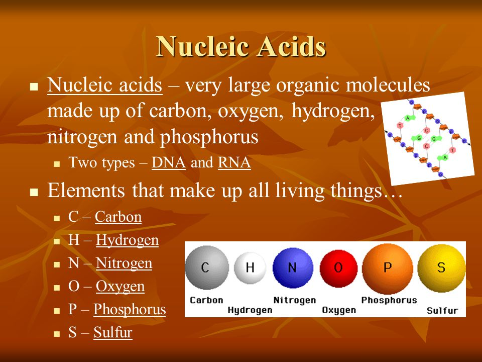 Nucleic Acids Nucleic acids – very large organic molecules made up of carbon, oxygen, hydrogen, nitrogen and phosphorus.