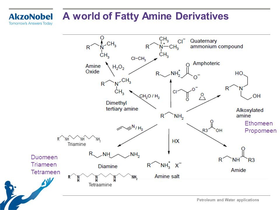 A world of Fatty Amine Derivatives