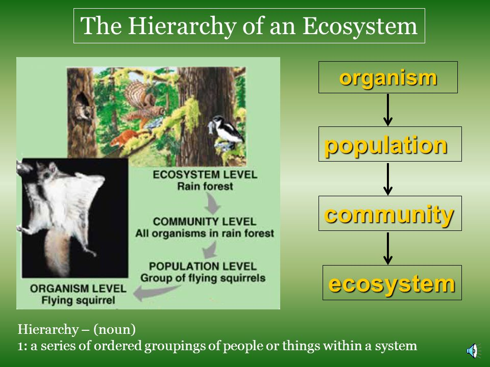 The Hierarchy of an Ecosystem