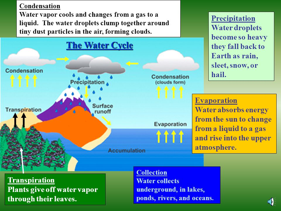 The Water Cycle Precipitation