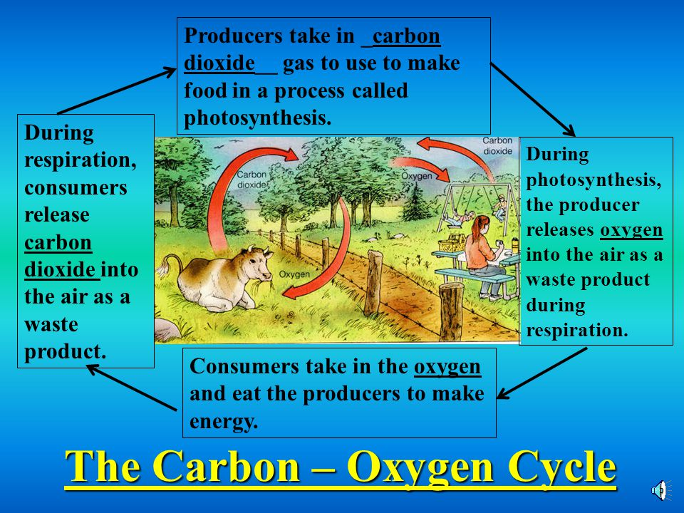 The Carbon – Oxygen Cycle