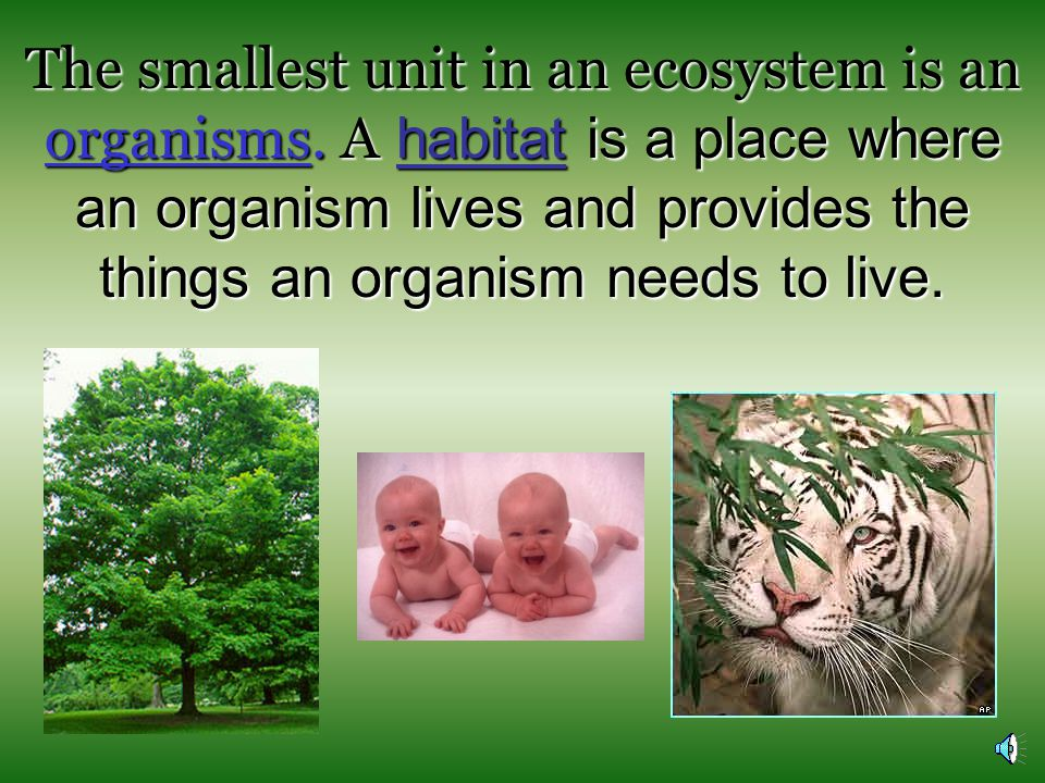 The smallest unit in an ecosystem is an organisms