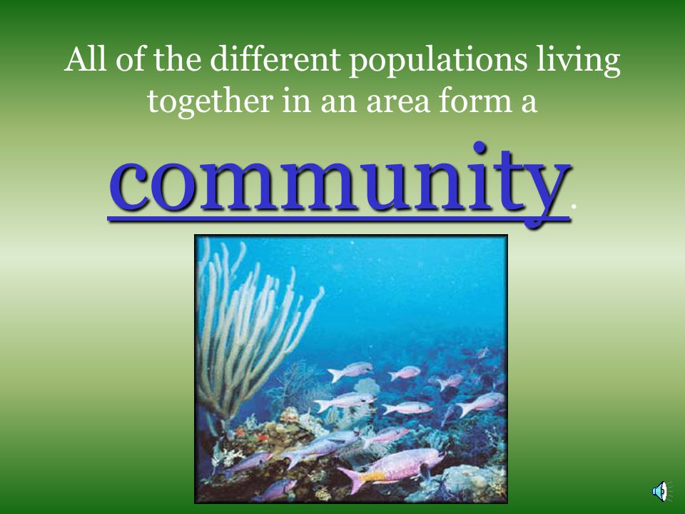 All of the different populations living together in an area form a community.