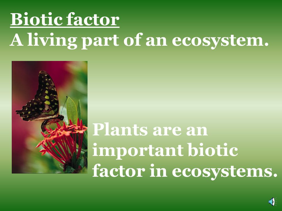 Biotic factor A living part of an ecosystem.