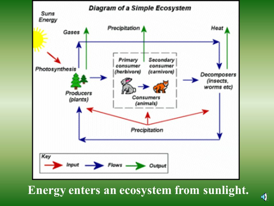 Energy enters an ecosystem from sunlight.