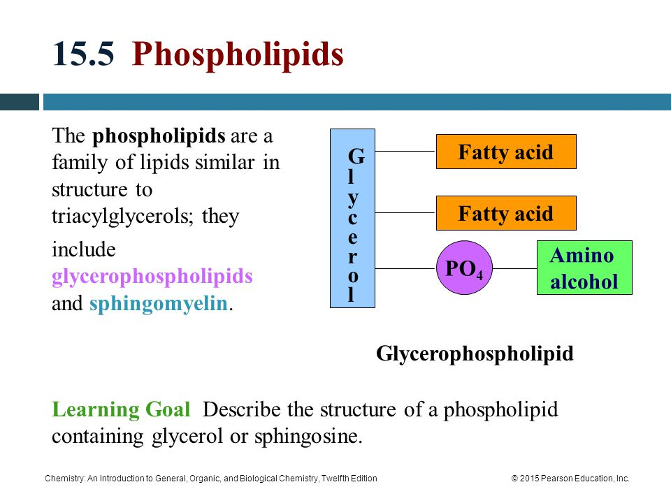 15.5 Phospholipids The phospholipids are a family of lipids similar in structure to triacylglycerols; they.