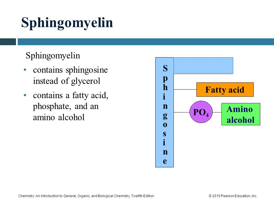 Sphingomyelin Sphingomyelin contains sphingosine instead of glycerol