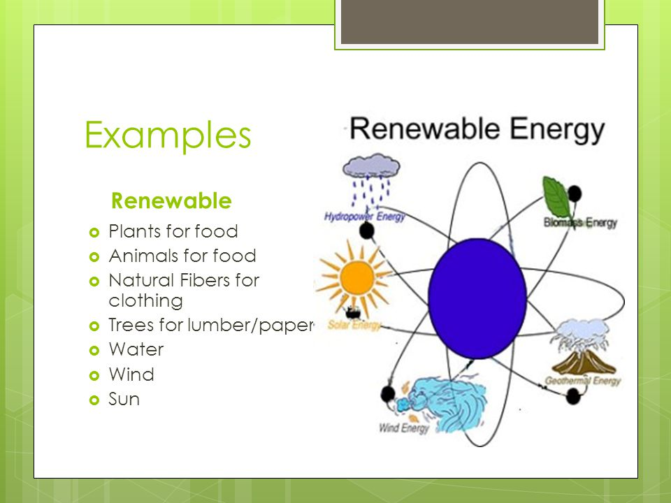 Examples Renewable Plants for food Animals for food