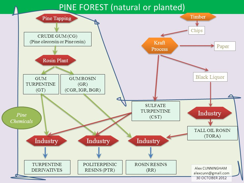 PINE FOREST (natural or planted)
