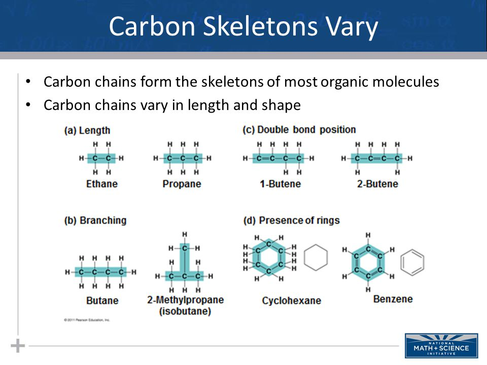 Carbon Skeletons Vary Carbon chains form the skeletons of most organic molecules. Carbon chains vary in length and shape.