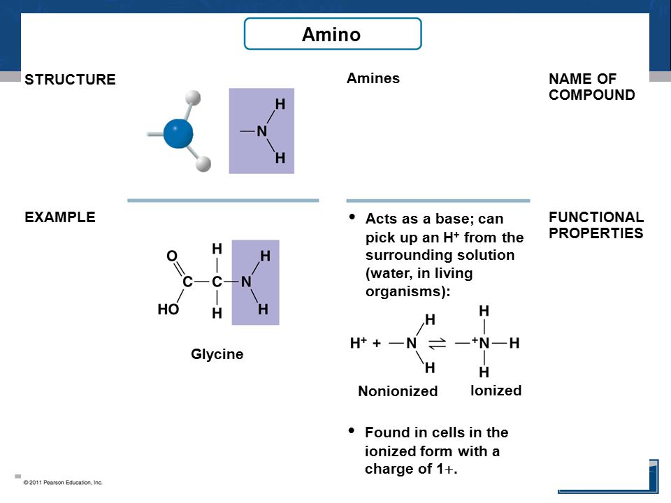 Amino • Acts as a base; can • Found in cells in the STRUCTURE Amines