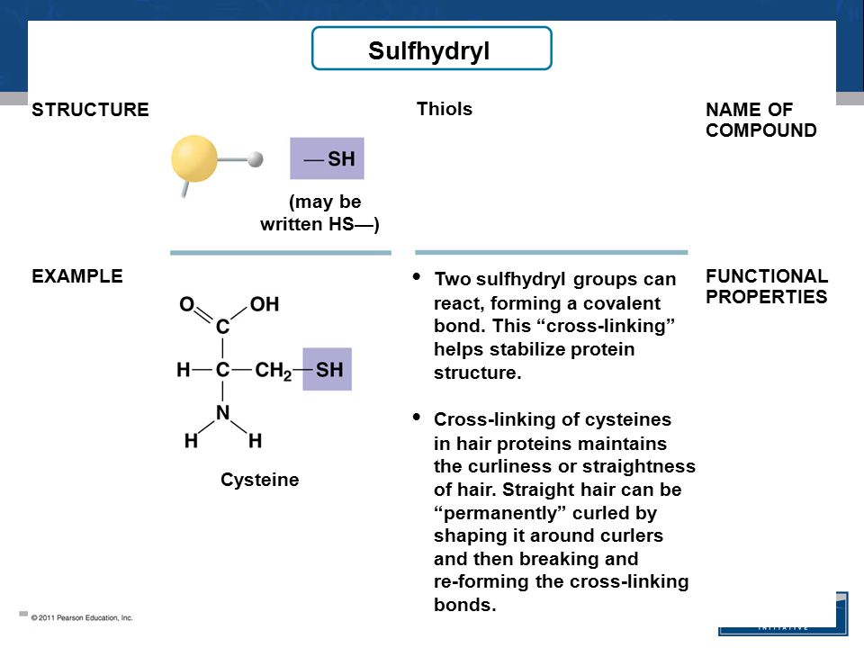 Sulfhydryl • Two sulfhydryl groups can • Cross-linking of cysteines