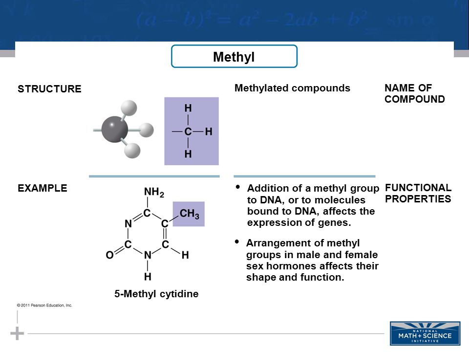 • Addition of a methyl group