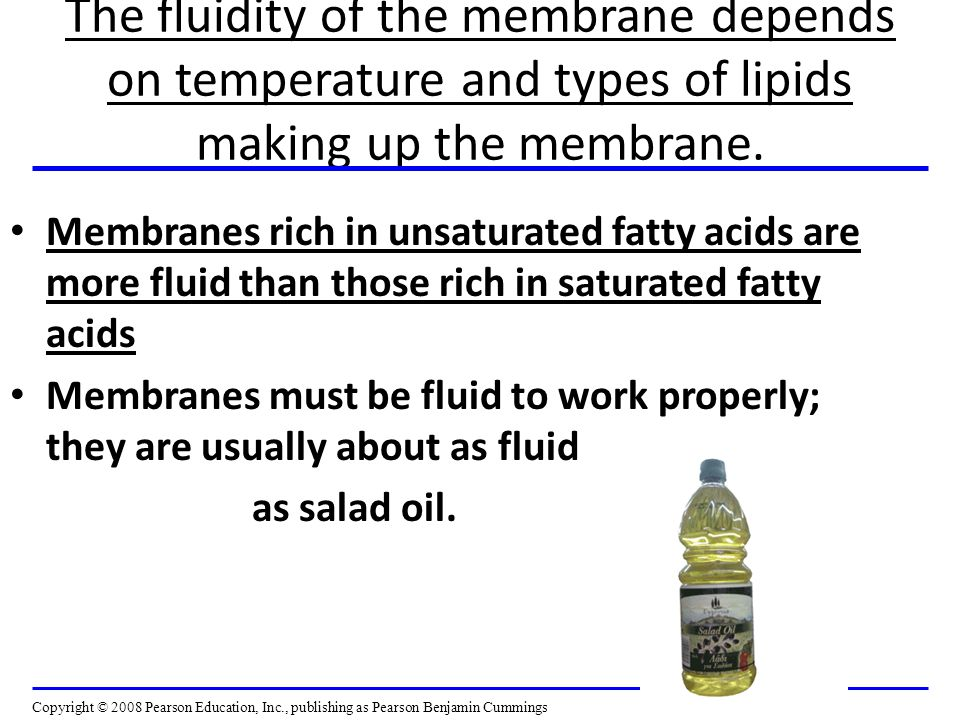 The fluidity of the membrane depends on temperature and types of lipids making up the membrane.