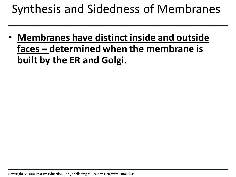 Synthesis and Sidedness of Membranes