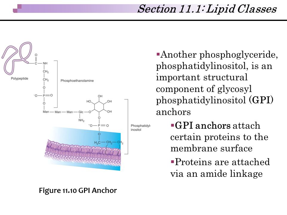 Section 11.1: Lipid Classes
