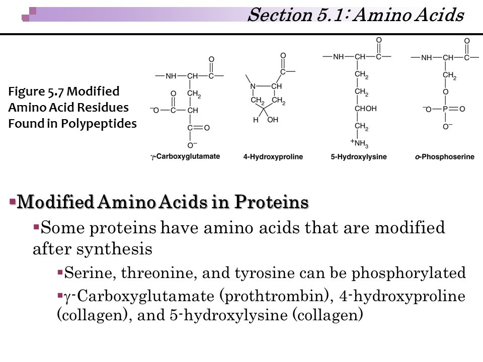 Modified Amino Acids in Proteins