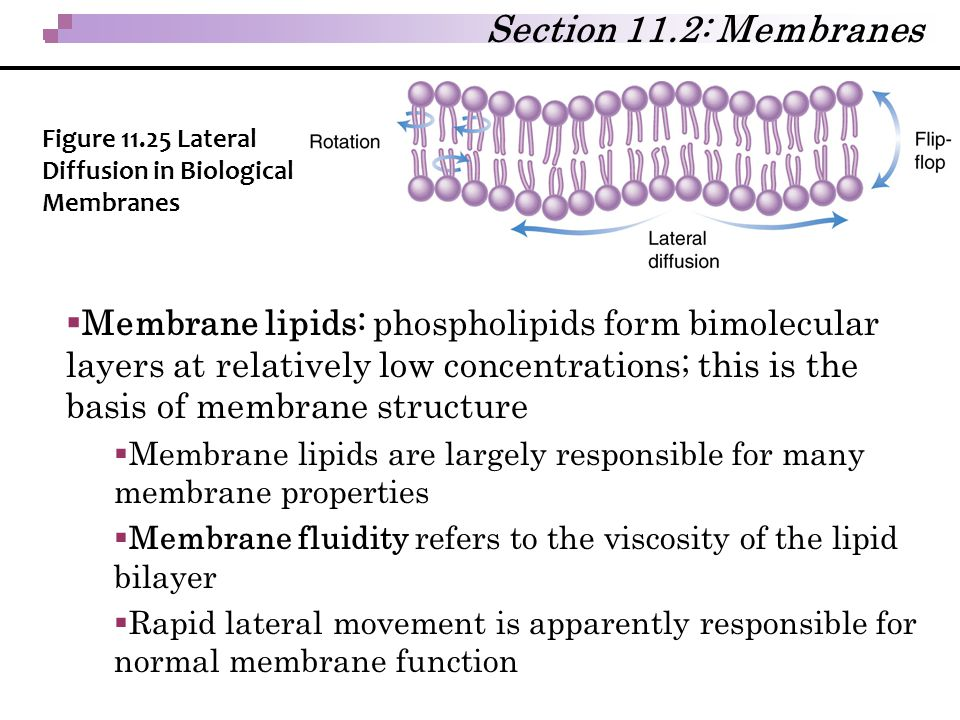Section 11.2: Membranes Figure 11.25 Lateral Diffusion in Biological Membranes.