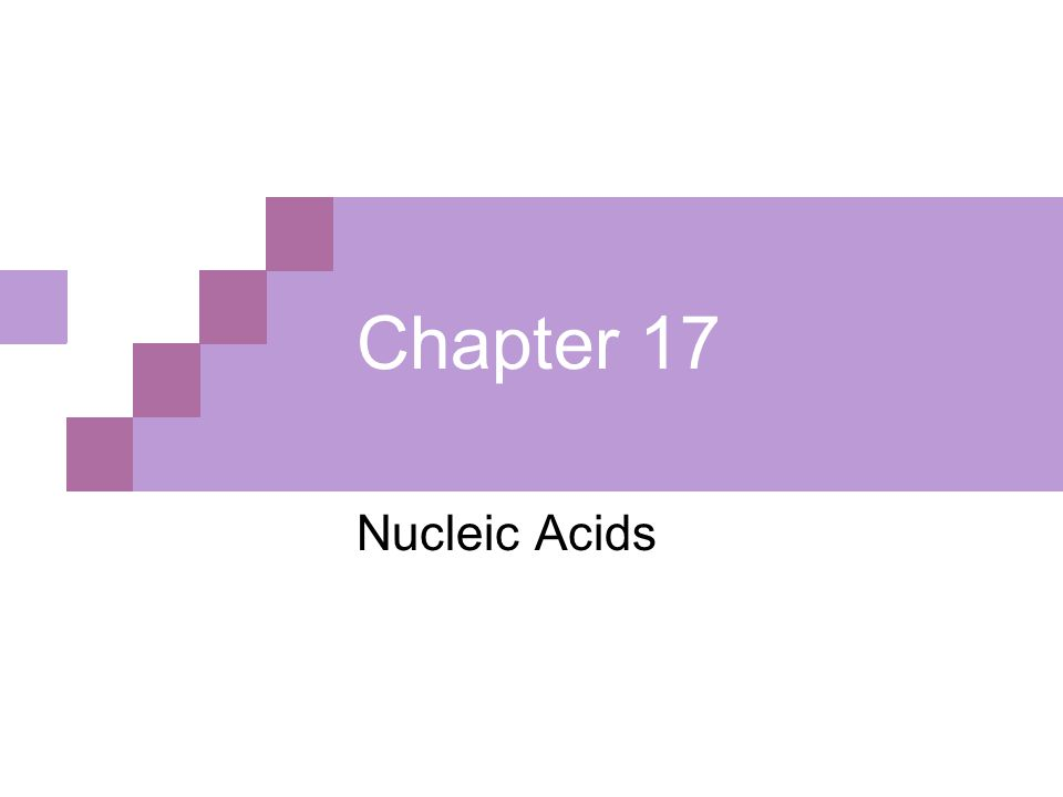 Chapter 17 Nucleic Acids