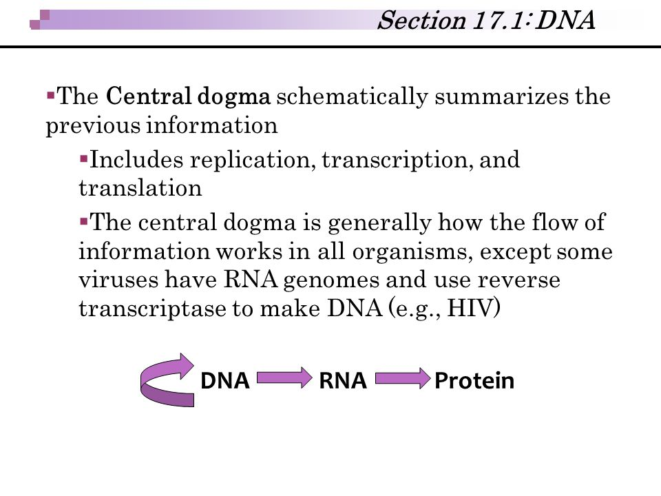 Section 17.1: DNA DNA RNA Protein