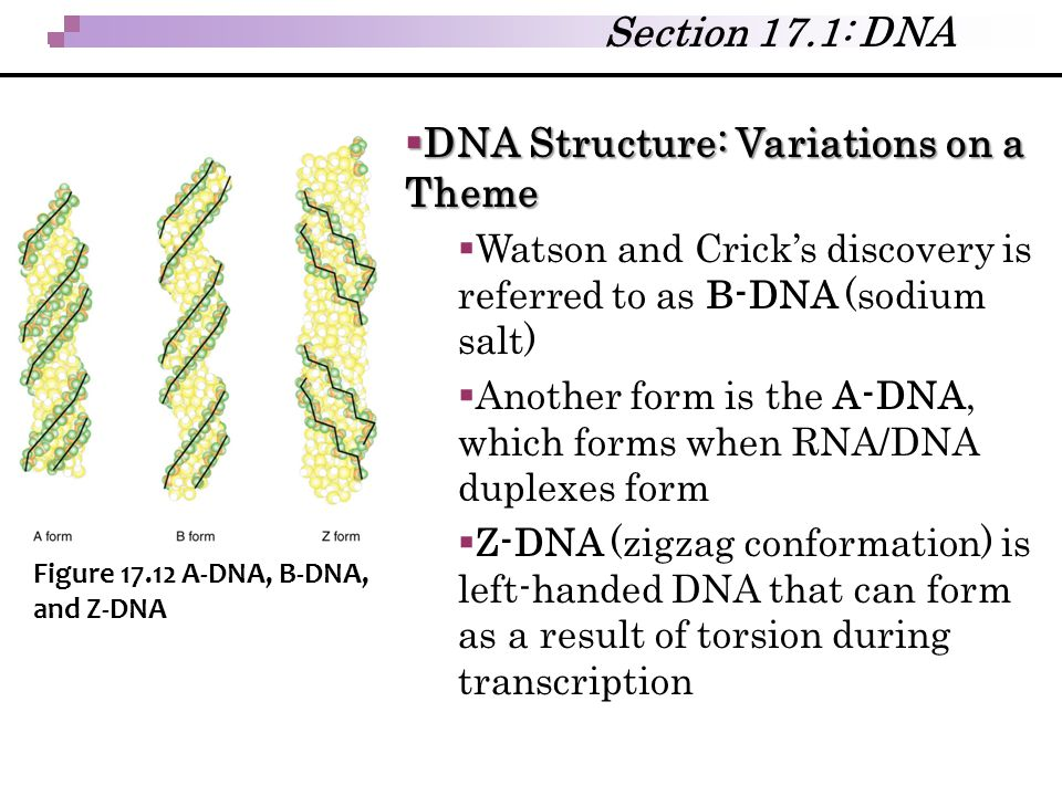 DNA Structure: Variations on a Theme