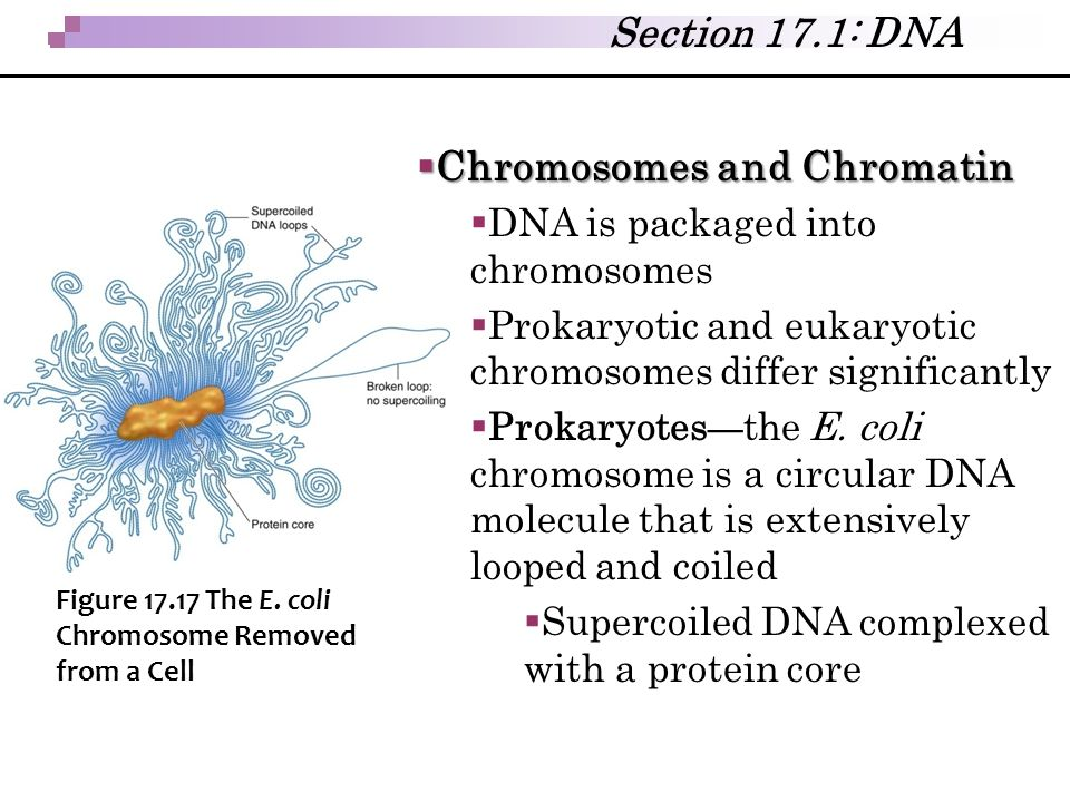 Chromosomes and Chromatin