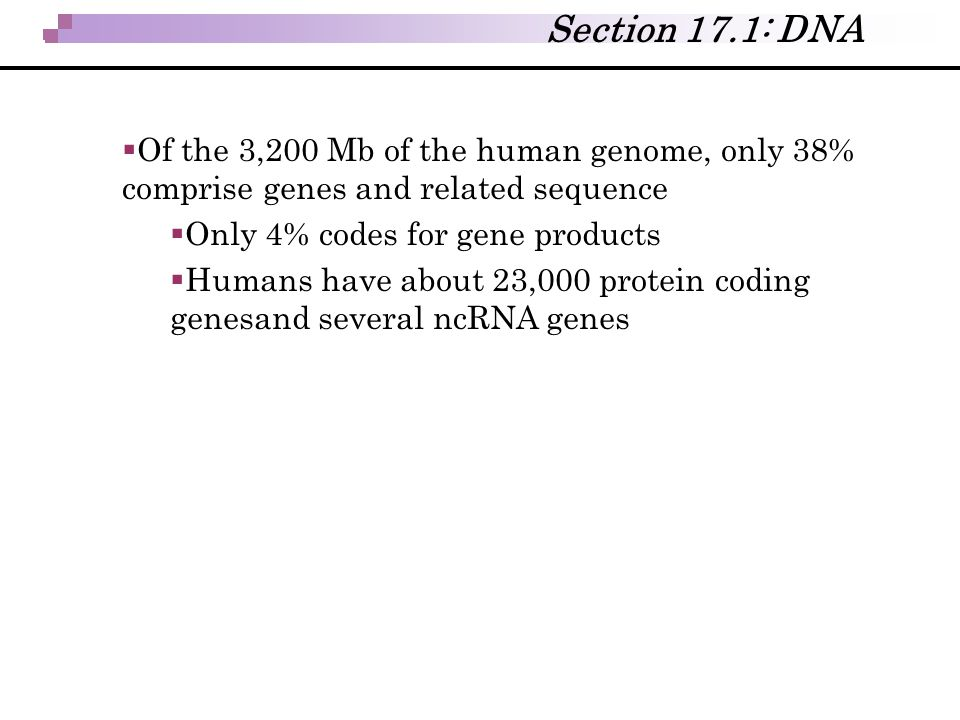 Section 17.1: DNA Of the 3,200 Mb of the human genome, only 38% comprise genes and related sequence.