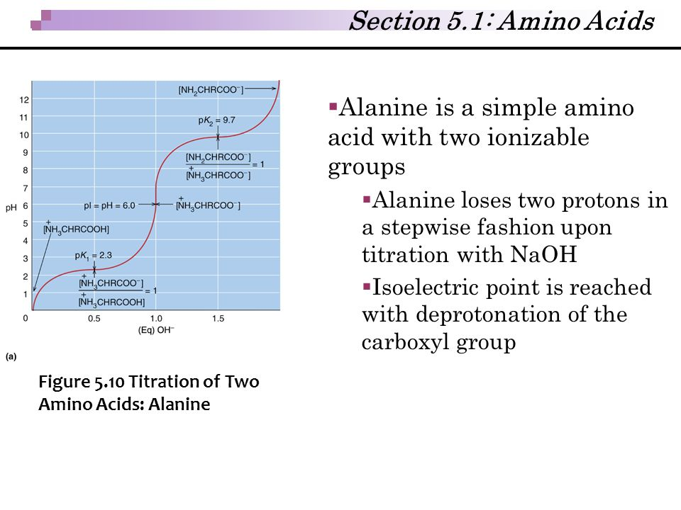 Section 5.1: Amino Acids Alanine is a simple amino acid with two ionizable groups.