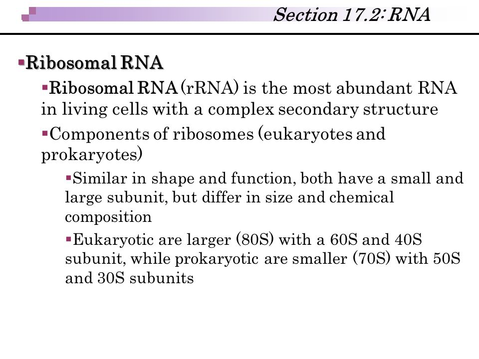 Section 17.2: RNA Ribosomal RNA